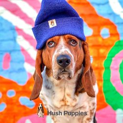 Hush Puppies catalogue ( 14 days left )