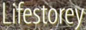 Logo Lifestorey